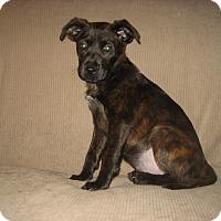 Adopt A Pet :: Cutiness Alert! - Randolph, NJ