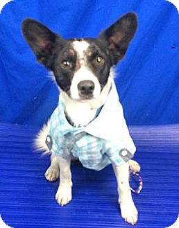 Terrier (Unknown Type, Small) Mix Dog for adoption in Spokane, Washington - Clyde