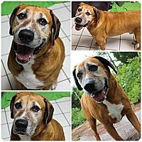 Adopt A Pet :: Bernie - Forked River, NJ