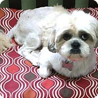 Adopt A Pet :: Hadley - Norwalk, CT