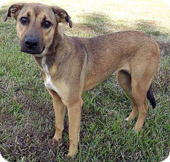 Shepherd (Unknown Type) Mix Dog for adoption in LAFAYETTE, Louisiana - SANDY