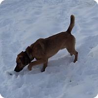 Adopt A Pet :: Scout - Chewelah, WA