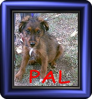Dachshund Mix Puppy for adoption in Cushing, Oklahoma - x PAL adopted