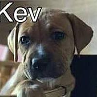 Adopt A Pet :: Kev - PEORIA, AZ