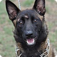 Adopt A Pet :: Ellie - Dripping Springs, TX