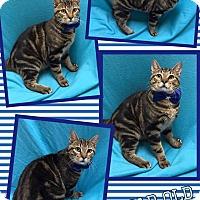 Adopt A Pet :: Cash - Lexington, NC