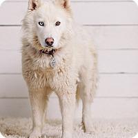 Adopt A Pet :: Anouk - Portland, OR