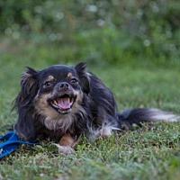 Adopt A Pet :: MOUSE - Methuen, MA