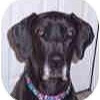 Adopt A Pet :: SHEEBA #2 - Pearl River, NY