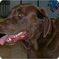 Adopt A Pet :: Hoss - Cumming, GA