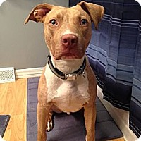 Adopt A Pet :: Lennon - Pittsbugh, PA