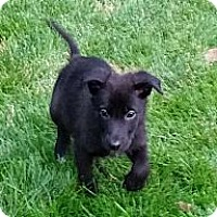 Adopt A Pet :: Hudson - Broomfield, CO