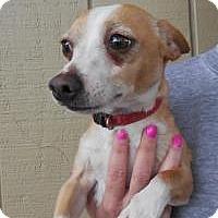 Adopt A Pet :: Junior - Shawnee Mission, KS