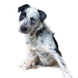 Terrier (Unknown Type, Medium) Mix Dog for adoption in Wilmington, Delaware - Capri