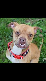 Pit Bull Terrier Mix Dog for adoption in Loganville, Georgia - Jethro