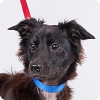 Adopt A Pet :: Kona - Jupiter, FL