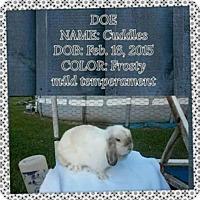 Adopt A Pet :: Cuddles - Paradis, LA