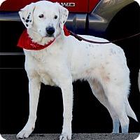 Adopt A Pet :: Annie PENDING - Sacramento, CA