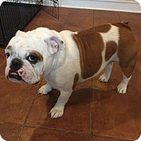 Adopt A Pet :: Tonka - Columbus, OH