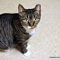 Adopt A Pet :: Darla - Island Park, NY
