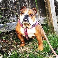 Adopt A Pet :: Remy - Columbus, OH