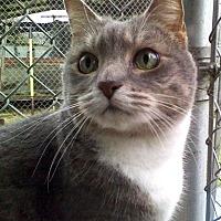 Adopt A Pet :: Amy - Santa Rosa, CA
