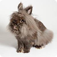 Adopt A Pet :: Steve - Kingston, ON