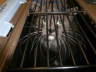 Adopt A Pet :: Lucy  - Princeton, WV