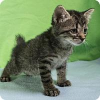 Adopt A Pet :: Xylophone 9 - Austin, TX