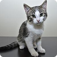 Adopt A Pet :: Gamora - Middleton, WI