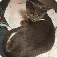 Adopt A Pet :: Yum Yum - Americus, GA