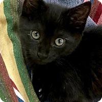 Adopt A Pet :: Randall - Nashville, IN