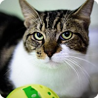 Adopt A Pet :: Junior - St. Petersburg, FL