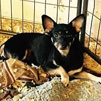 Adopt A Pet :: Mojo - Del Rio, TX