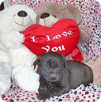 German Shepherd Dog/Shar Pei Mix Puppy for adoption in Ranger, Texas - Jazmine