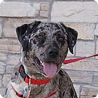 Adopt A Pet :: Bacardi - Newcastle, OK