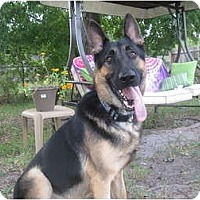 Adopt A Pet :: Otis - Green Cove Springs, FL