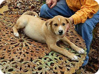 Shepherd (Unknown Type) Mix Puppy for adoption in Brattleboro, Vermont - Owen