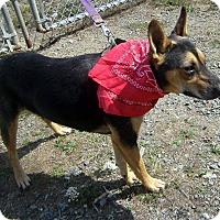 Adopt A Pet :: Tilly - Crescent City, CA