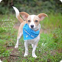 Adopt A Pet :: Princess Leia - Fort Valley, GA