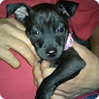 Adopt A Pet :: Dee Dee - San Antonio, TX
