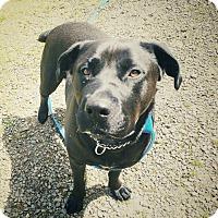 Adopt A Pet :: Betty - Tillamook, OR