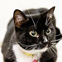 Adopt A Pet :: Mercedes - oakland park, FL