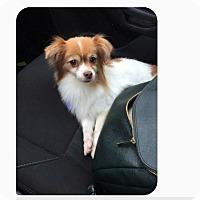 Adopt A Pet :: Puddin - conroe, TX