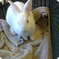 Adopt A Pet :: A711420 - Sacramento, CA