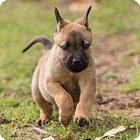 Adopt A Pet :: Bonnie - Dacula, GA