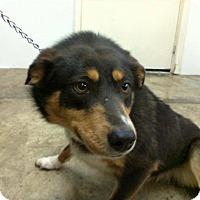 Adopt A Pet :: John - Upper Sandusky, OH