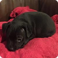 Adopt A Pet :: Dash - Oakley, CA