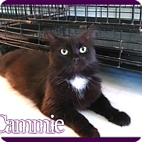 Adopt A Pet :: Cammie - Corinth, NY