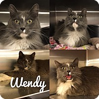 Adopt A Pet :: Wendy - Spring Brook, NY